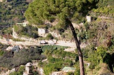 Costa Di Amalfi Vegetazione