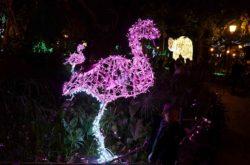 La Villa Comunale, il fenicottero rosa