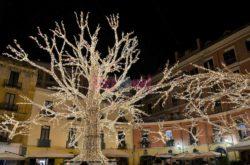 Piazza Flavio Gioia, l'albero