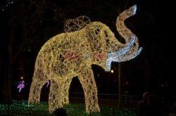 La Villa Comunale, l'elefante
