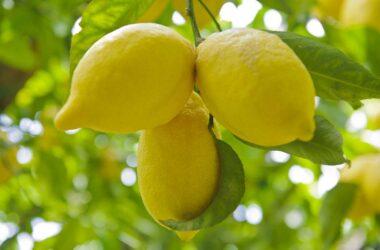 Tour Sentiero dei Limoni