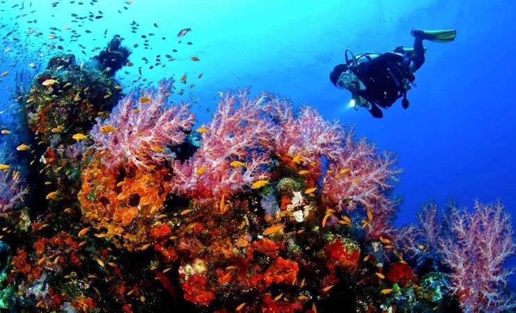 Diving center Nettuno -immersione