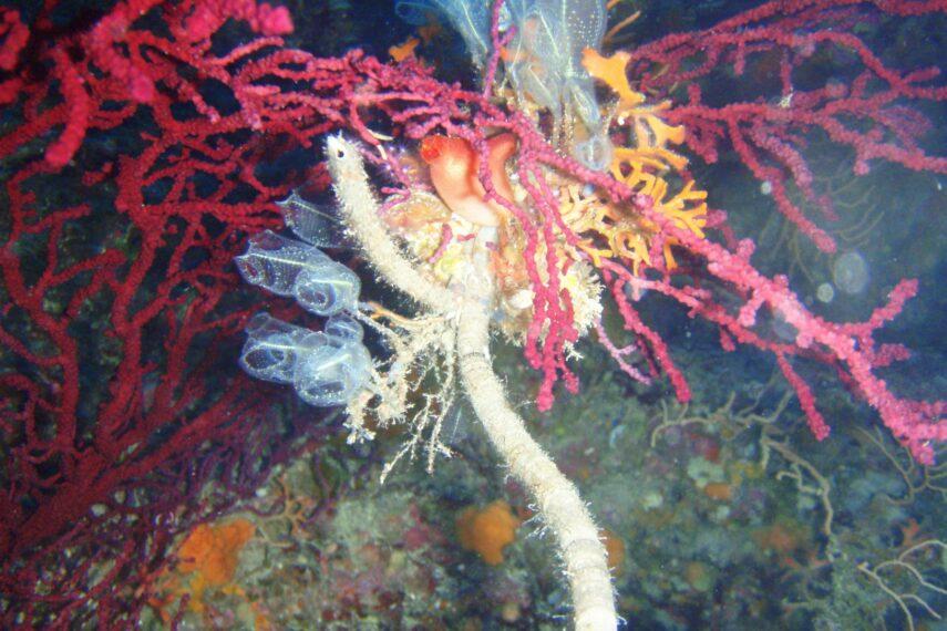 Diving center Nettuno -fauna marina